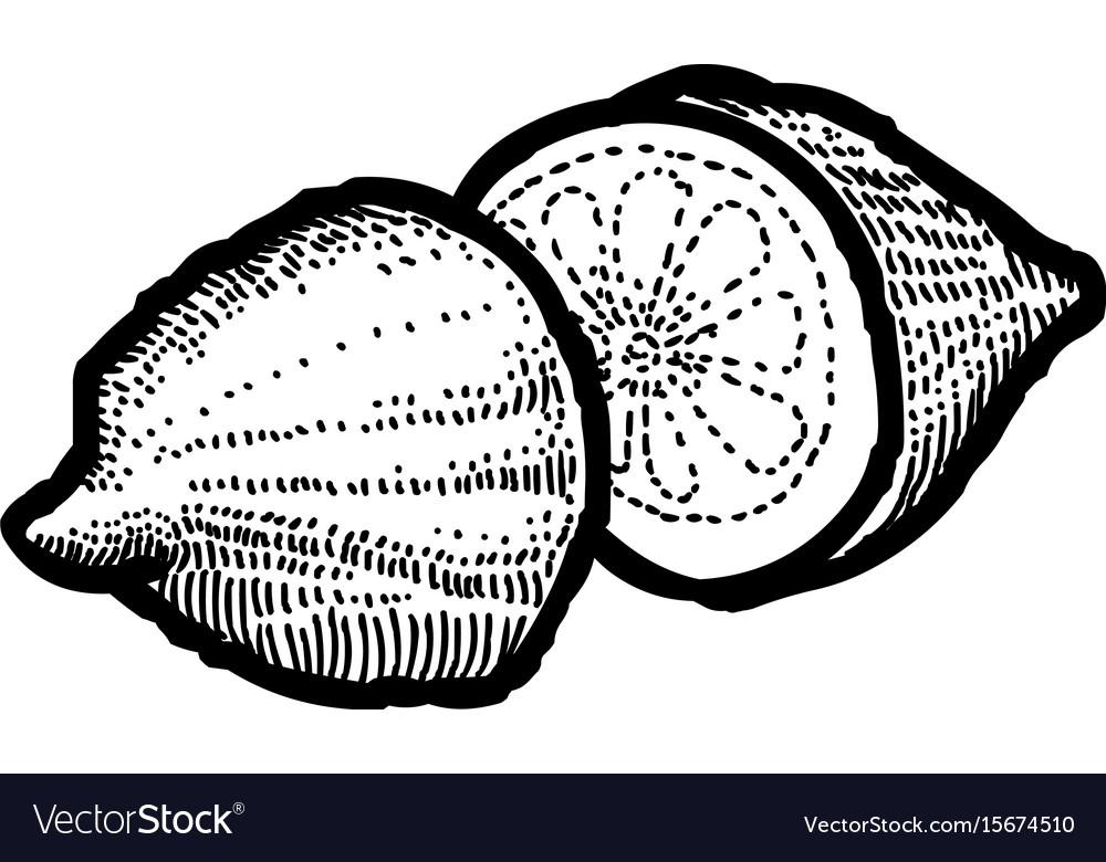 Cartoon image of lemon icon fruit symbol vector image