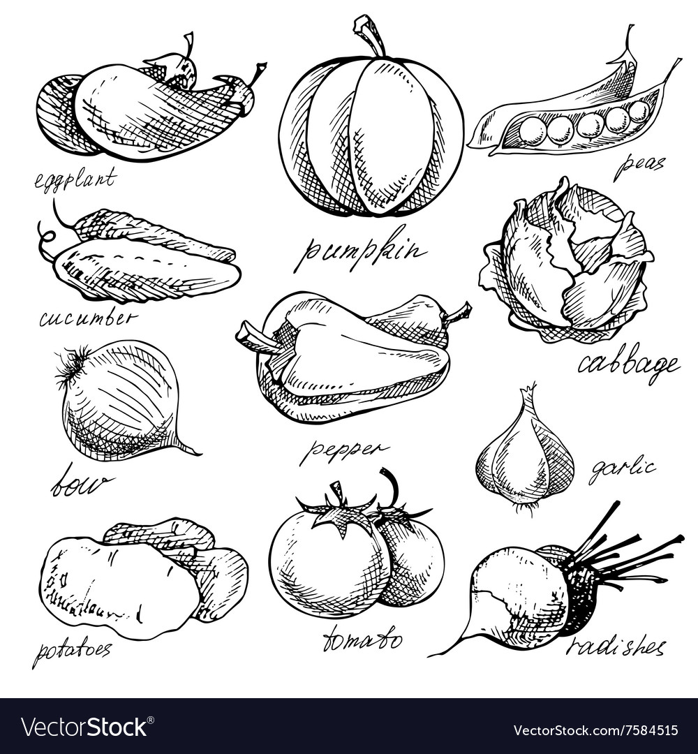 Set of various doodles hand drawn vegetables