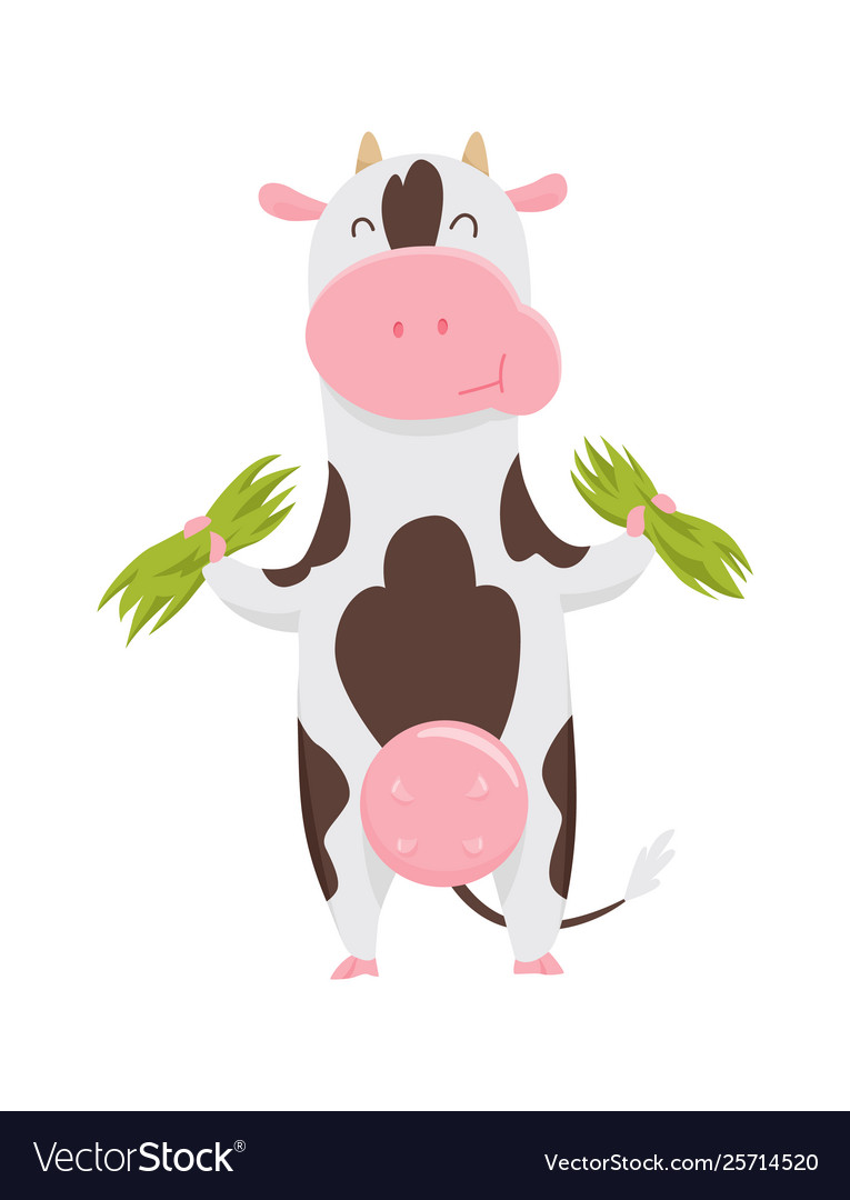 Cute spotted cow eating grass funny farm animal