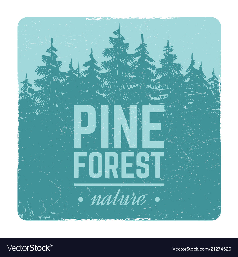 Sketch vintage nature pine and fir tree forest