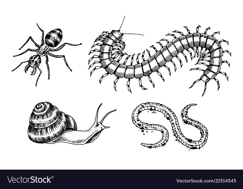 Big set insects bugs beetles snail worm