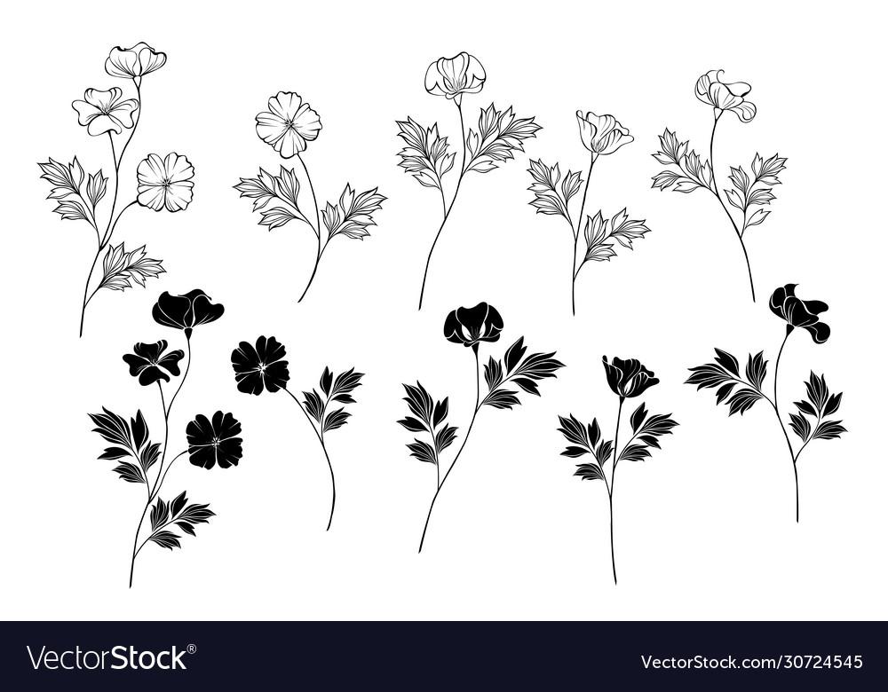 Monochrome california poppy