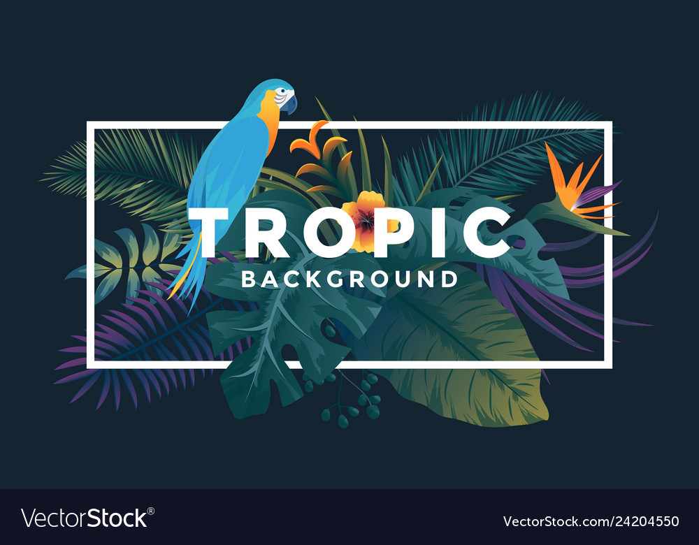 Tropical background 5