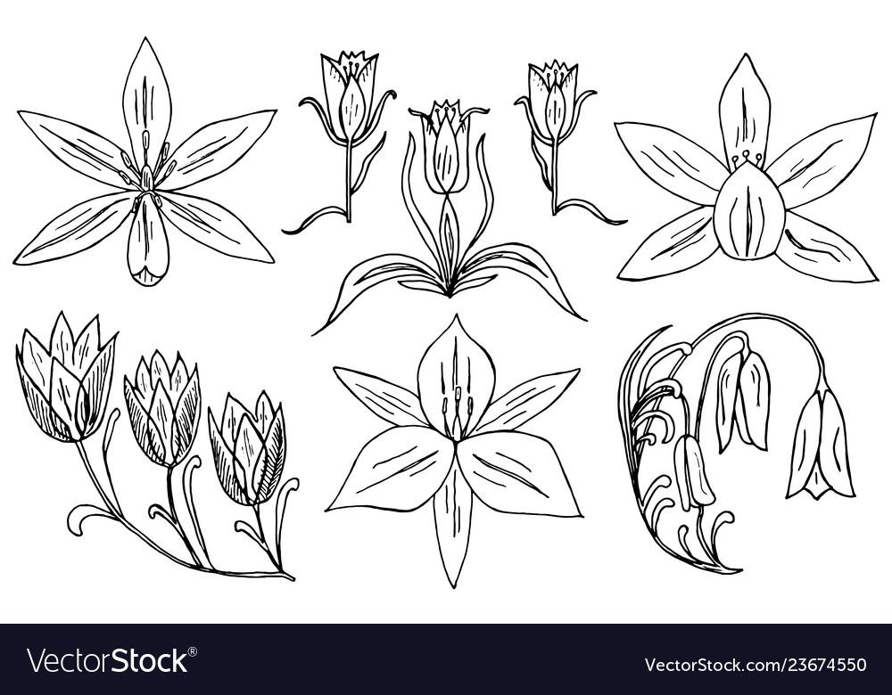 Wild flowers with leaves set of wedding botanical
