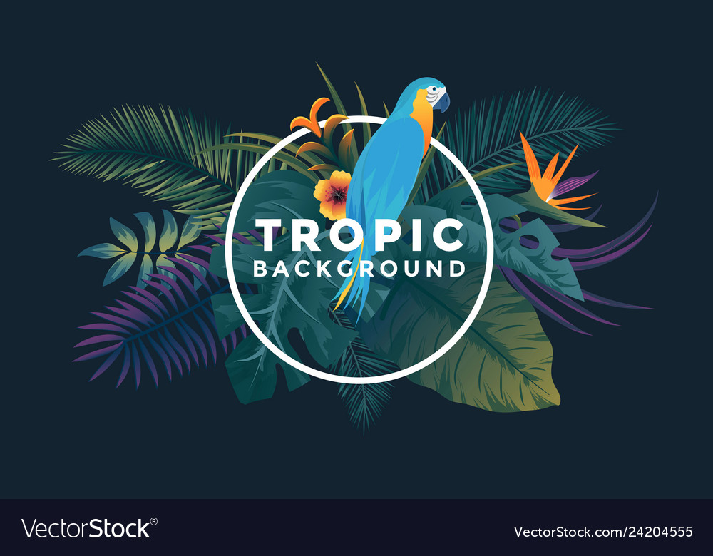 Tropical background with frame 6