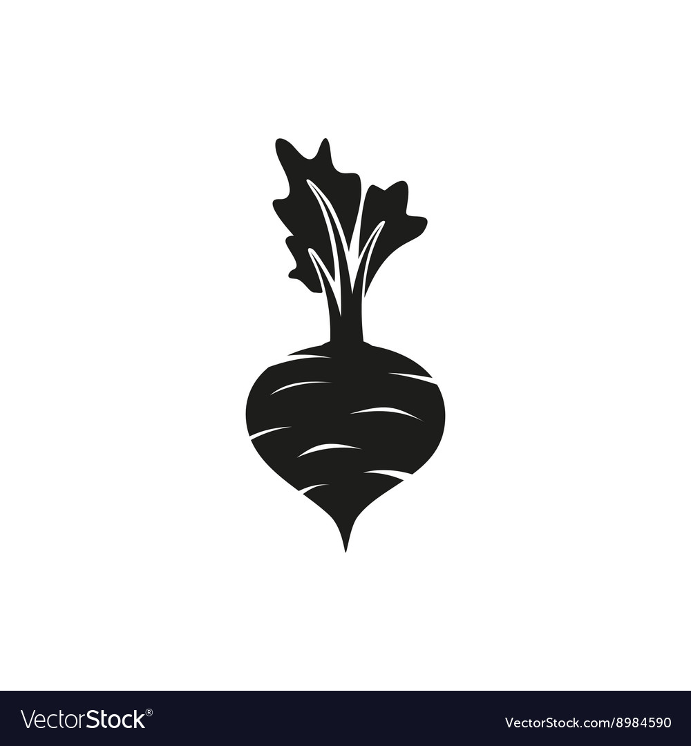 Beet on white background vector image