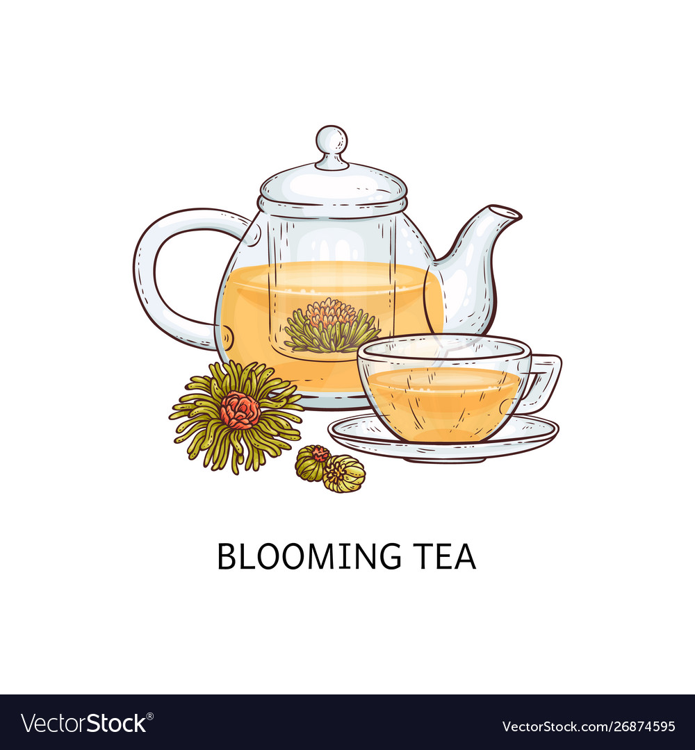 Herbal tea types concept blooming tea sketch