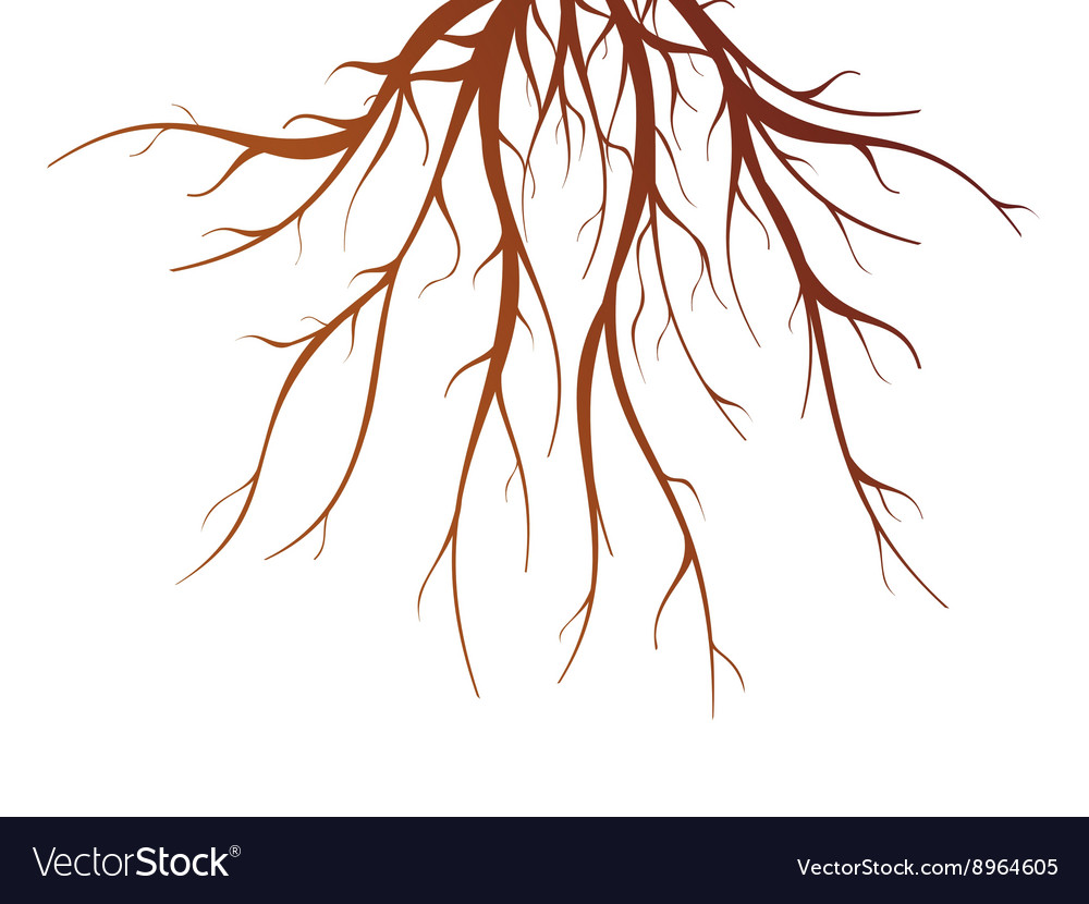 Tree Root Isolated vector image