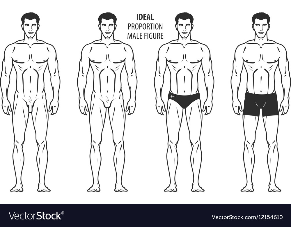 ideal proportion male figure hand drawn outline vector image