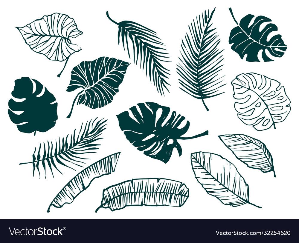 Set hand-drawn tropical leaves trendy