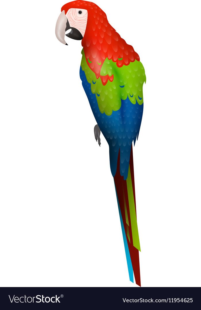 Parrot bird detalised on white background