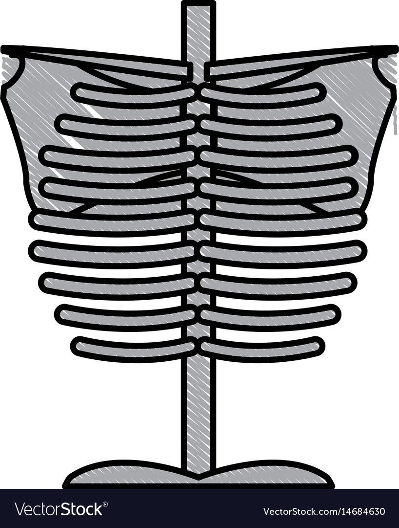 Skeleton Chest Human Part Anatomy Royalty Free Vector Image