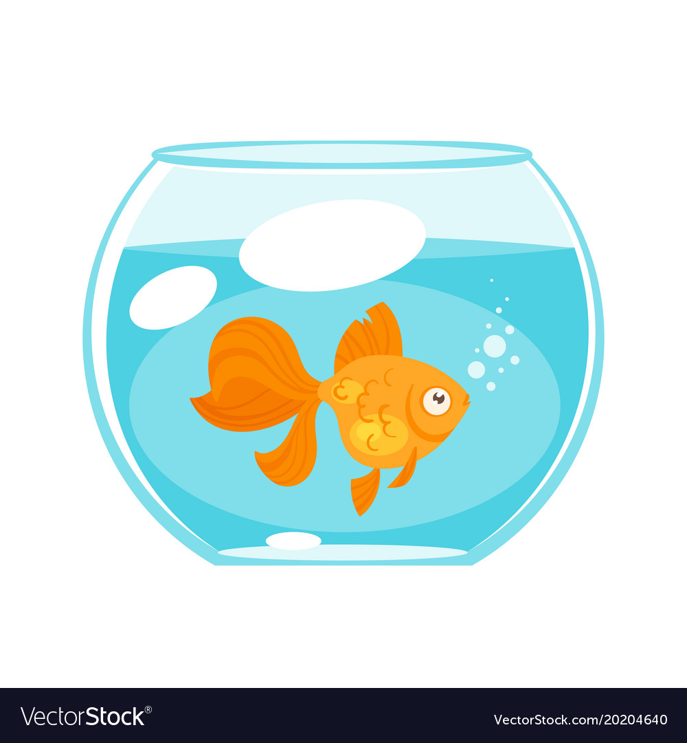 Animal pet - gold fish