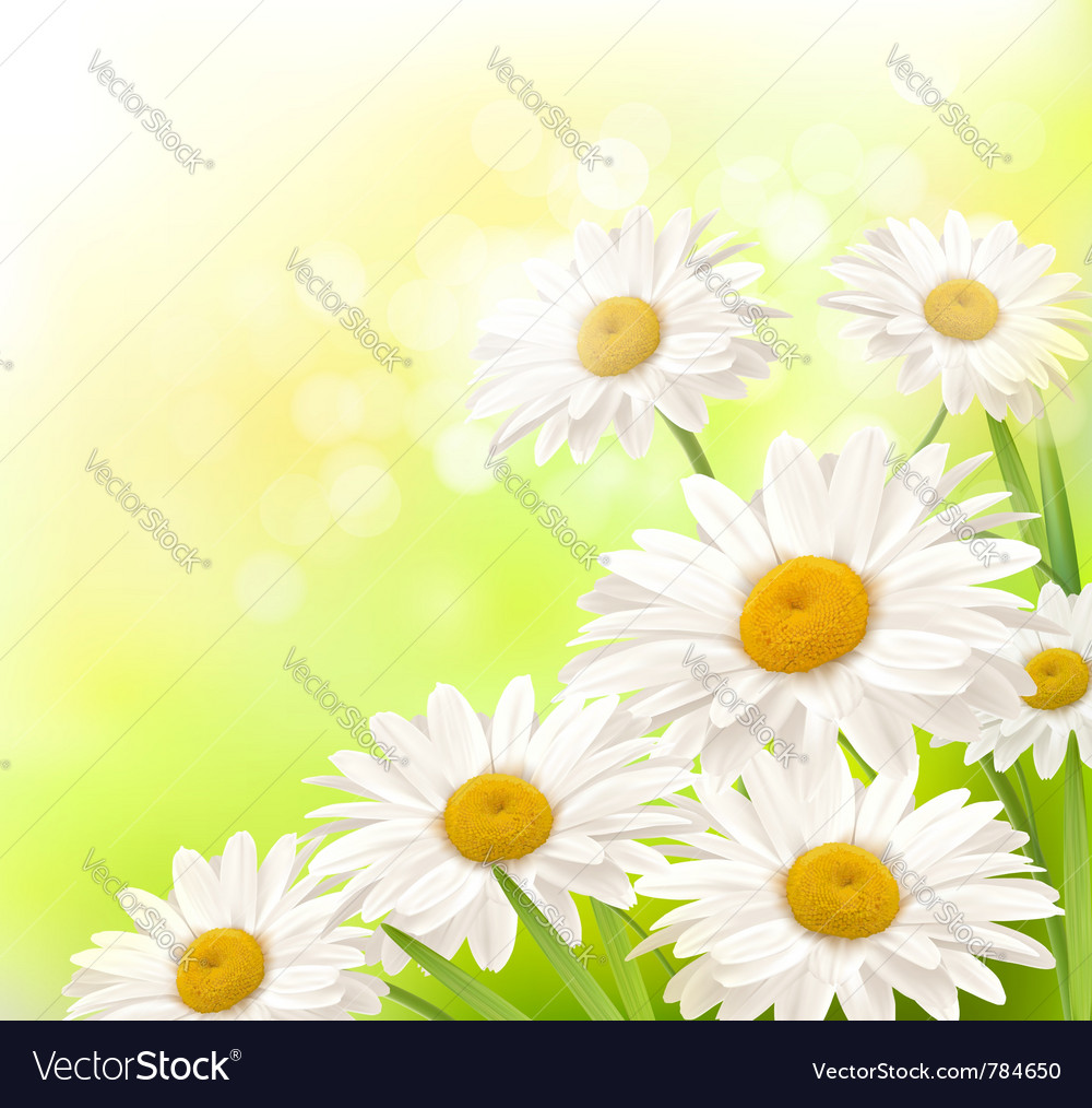 Beautiful daisies background vector image