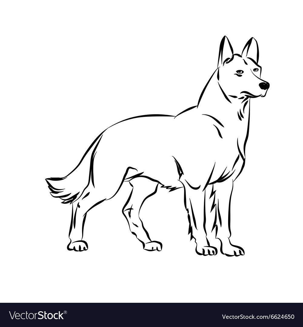 Image of an dog