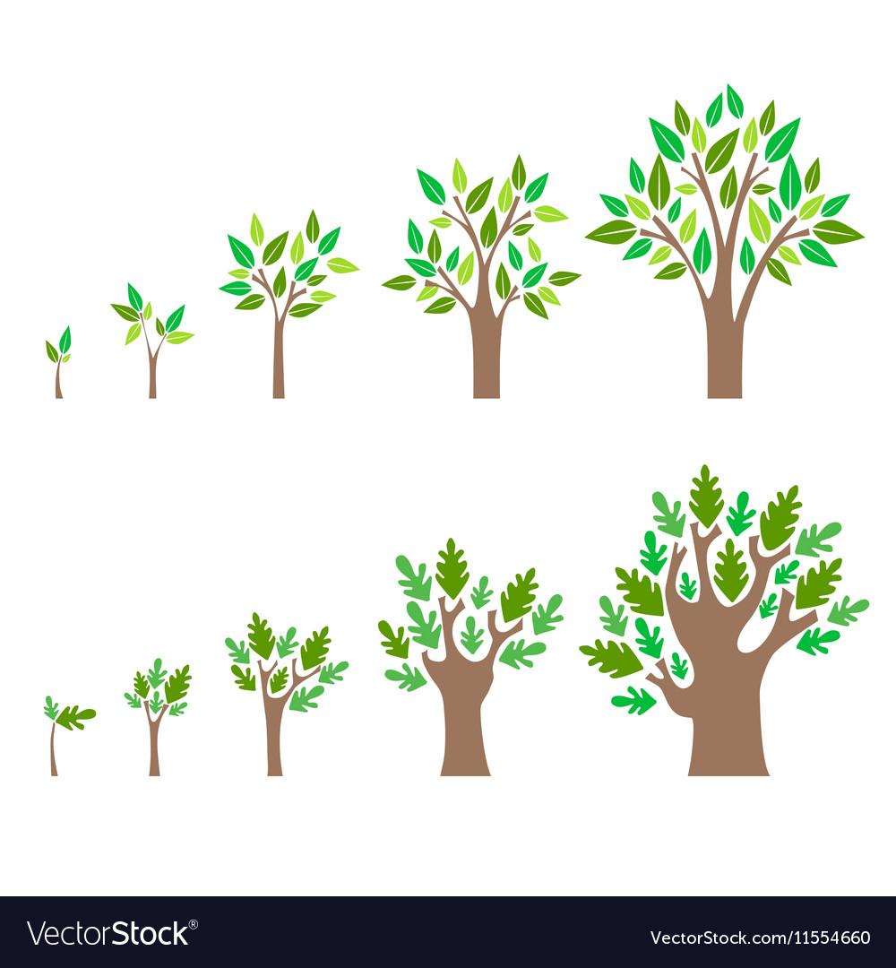 Stage Growth of a Tree Set