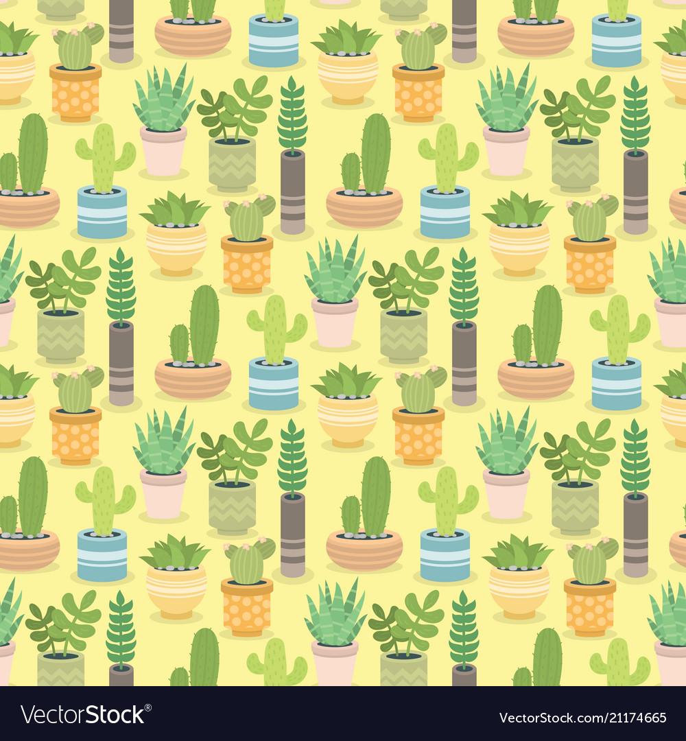 Cactus green plant cactaceous home nature cacti