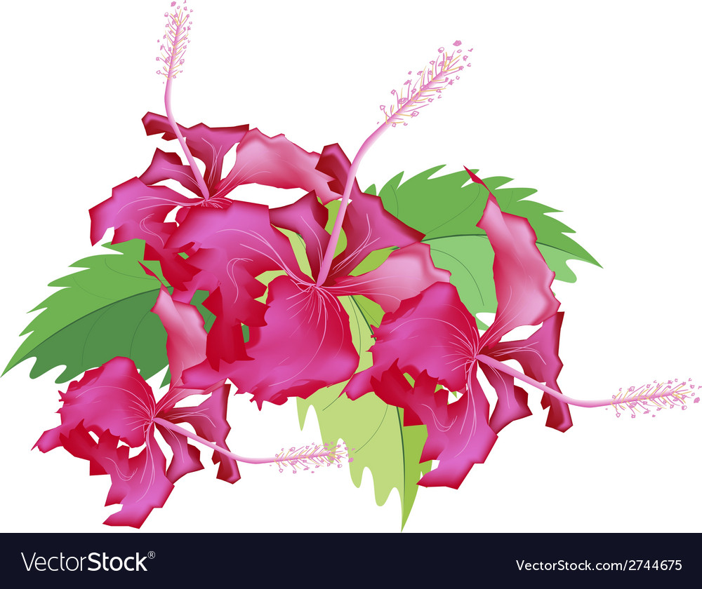 A Stack Of Fresh Red Hibiscus Flowers Royalty Free Vector