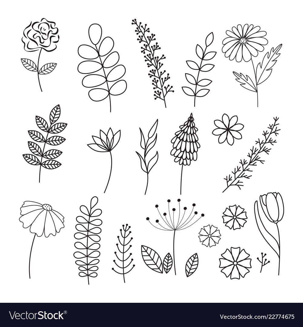 Hand drawn collection herbs and flowers