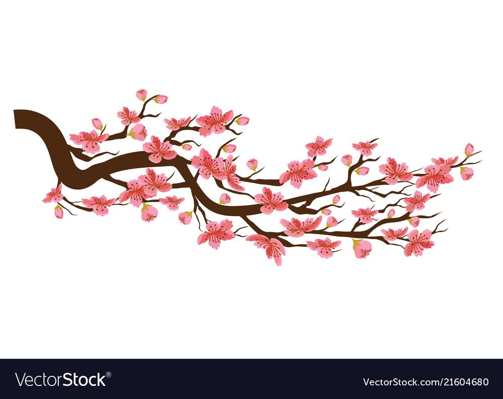 Chinese New Year Sakura Flowers Background Cherry Vector Image