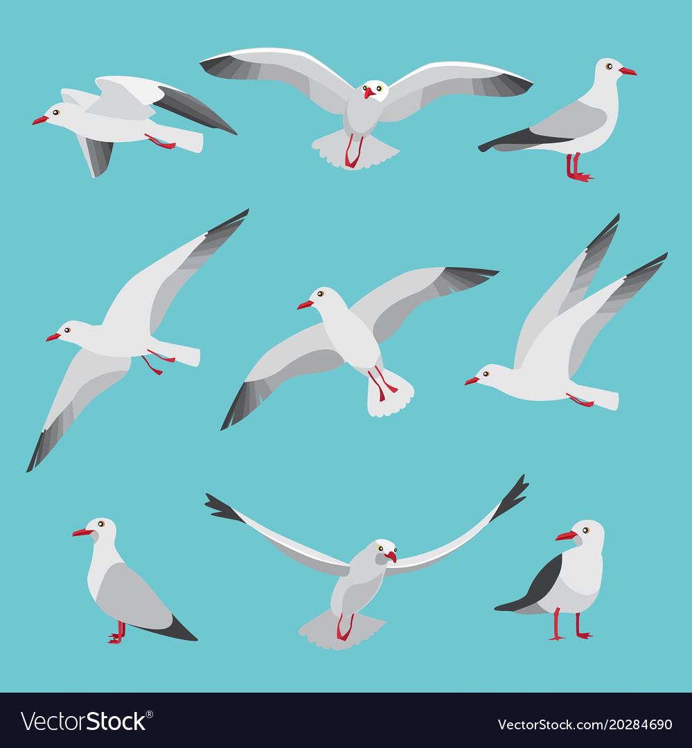 Set of atlantic seagulls in cartoon