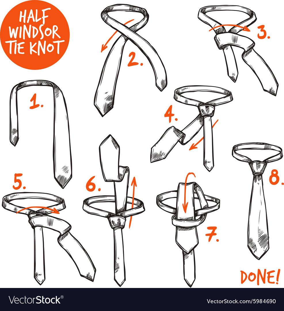 Tie Knot Sketch Royalty Free Vector Image Vectorstock Tying A Diagram