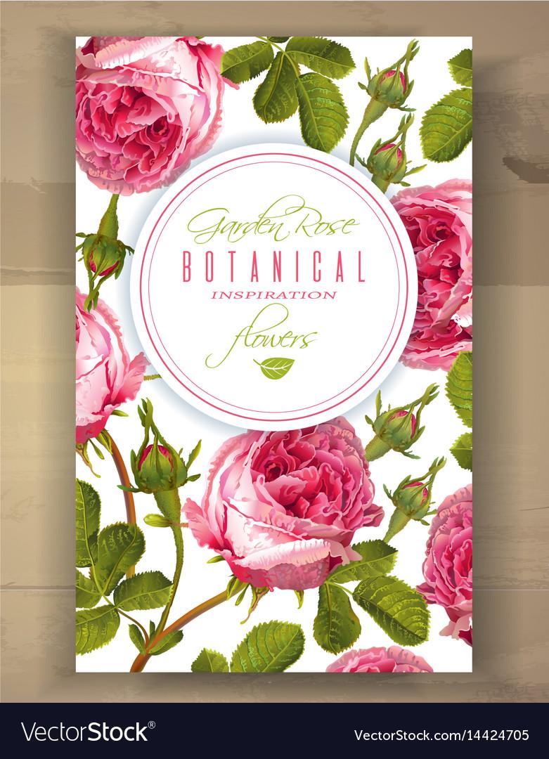 Rose vertical banner