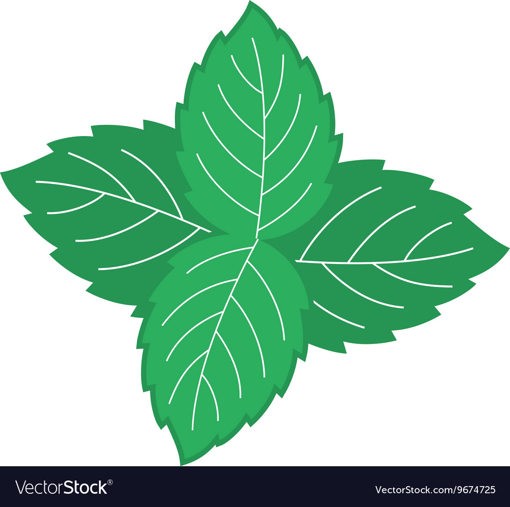 Mint leaves Four green mint leaves color symbol
