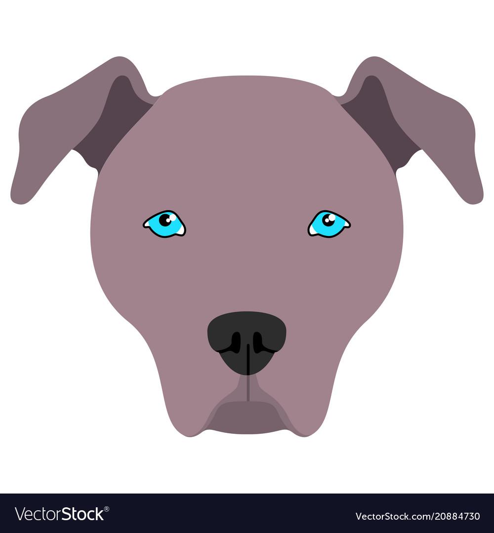 American pit bull terrier avatar