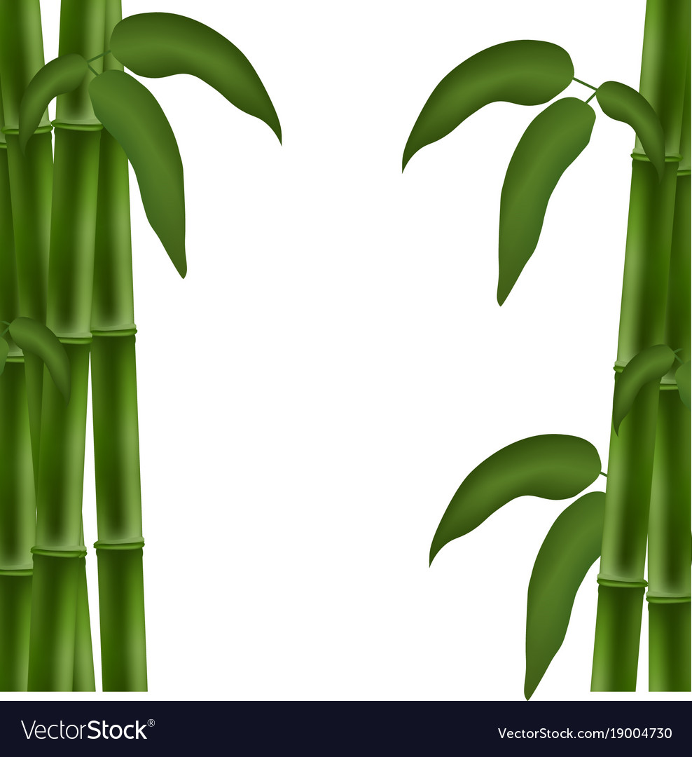 Bamboo Poster Template For Design Royalty Free Vector Image