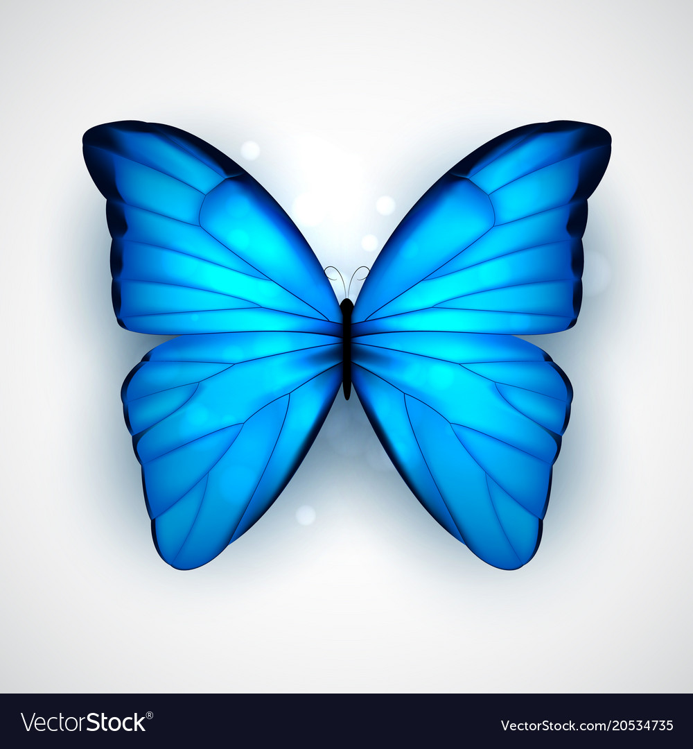 Blue Butterfly Royalty Free Vector Image Vectorstock