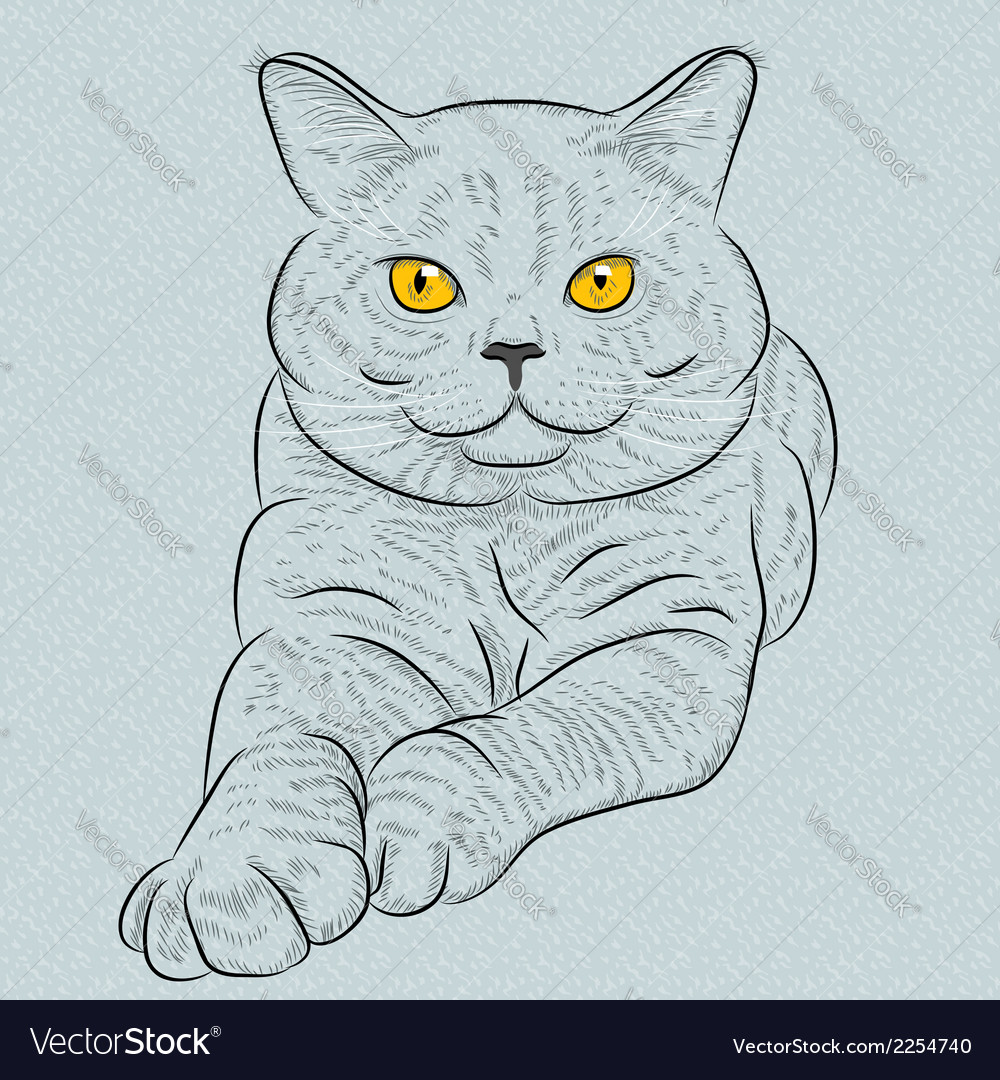 British blue cat with yellow eyes
