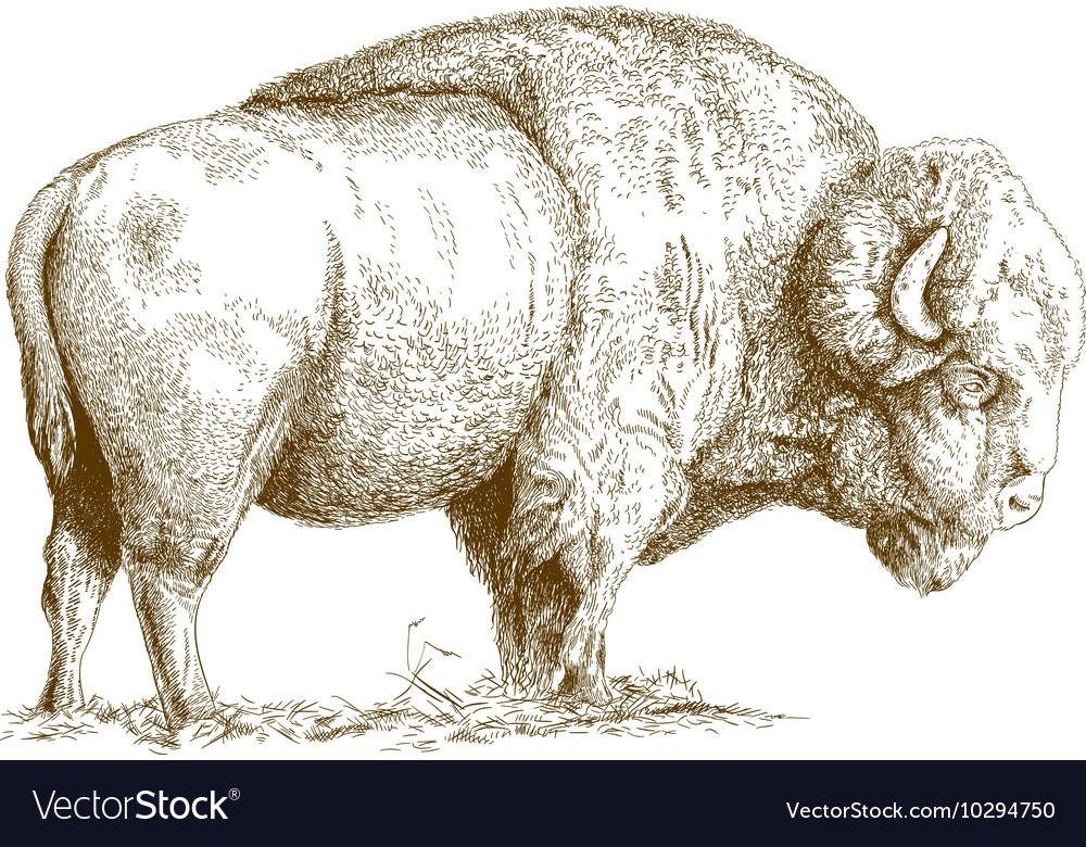 Etching bison