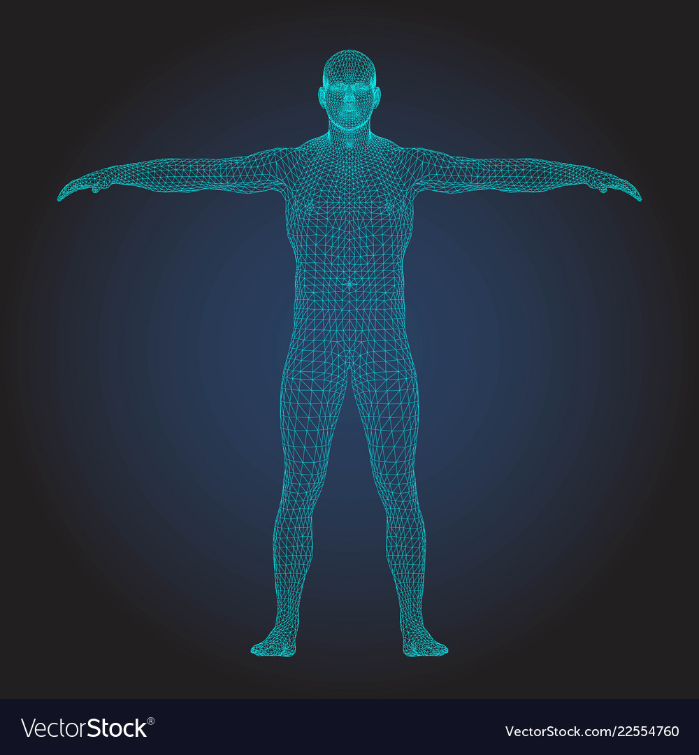 3d wireframe human body t-pose front view