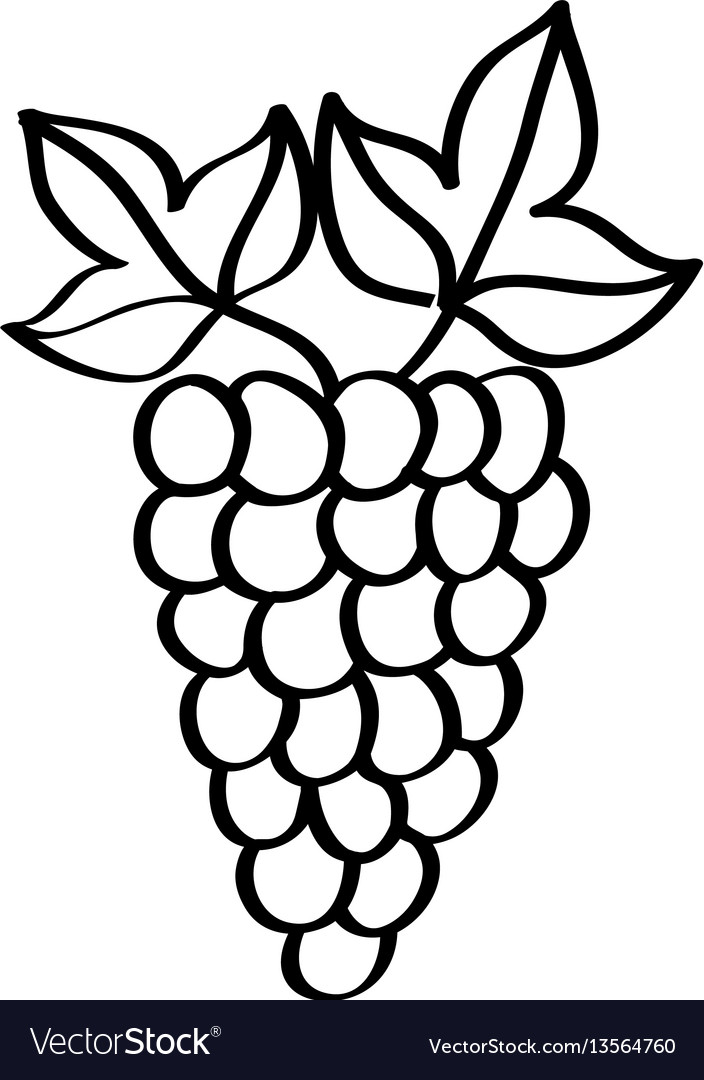 Grapes Fresh Fruit Drawing Icon Royalty Free Vector Image