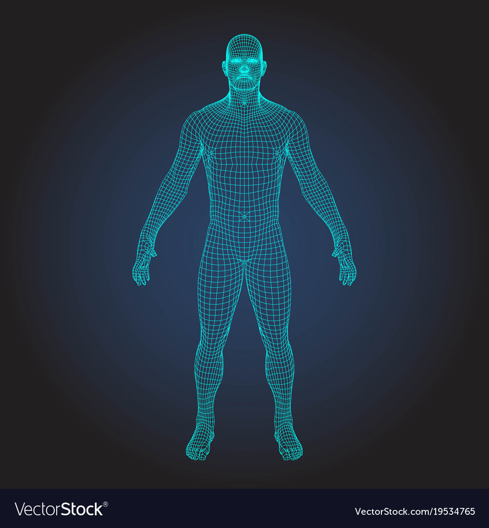 3d wireframe human body