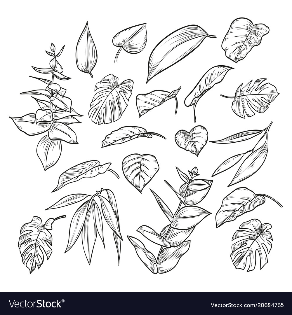 Hand drawn elegant leaves