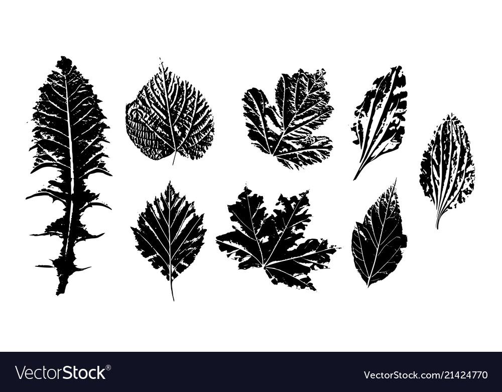 Ink leaf prints