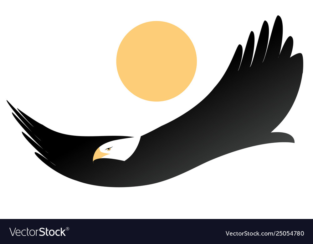 American eagle or white-headed eagle flying
