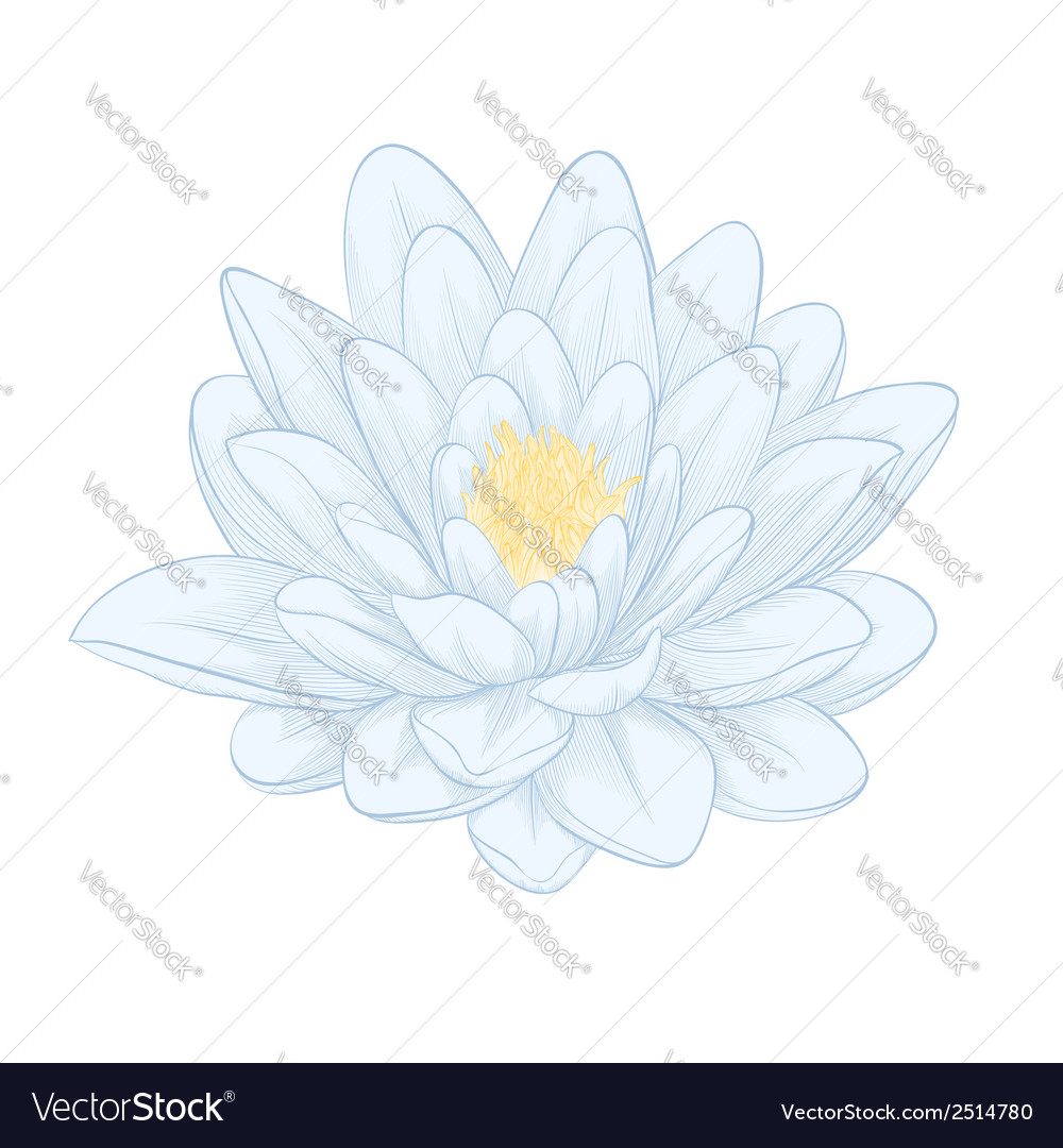 Lotus flower painted in graphic style isolated vector image izmirmasajfo