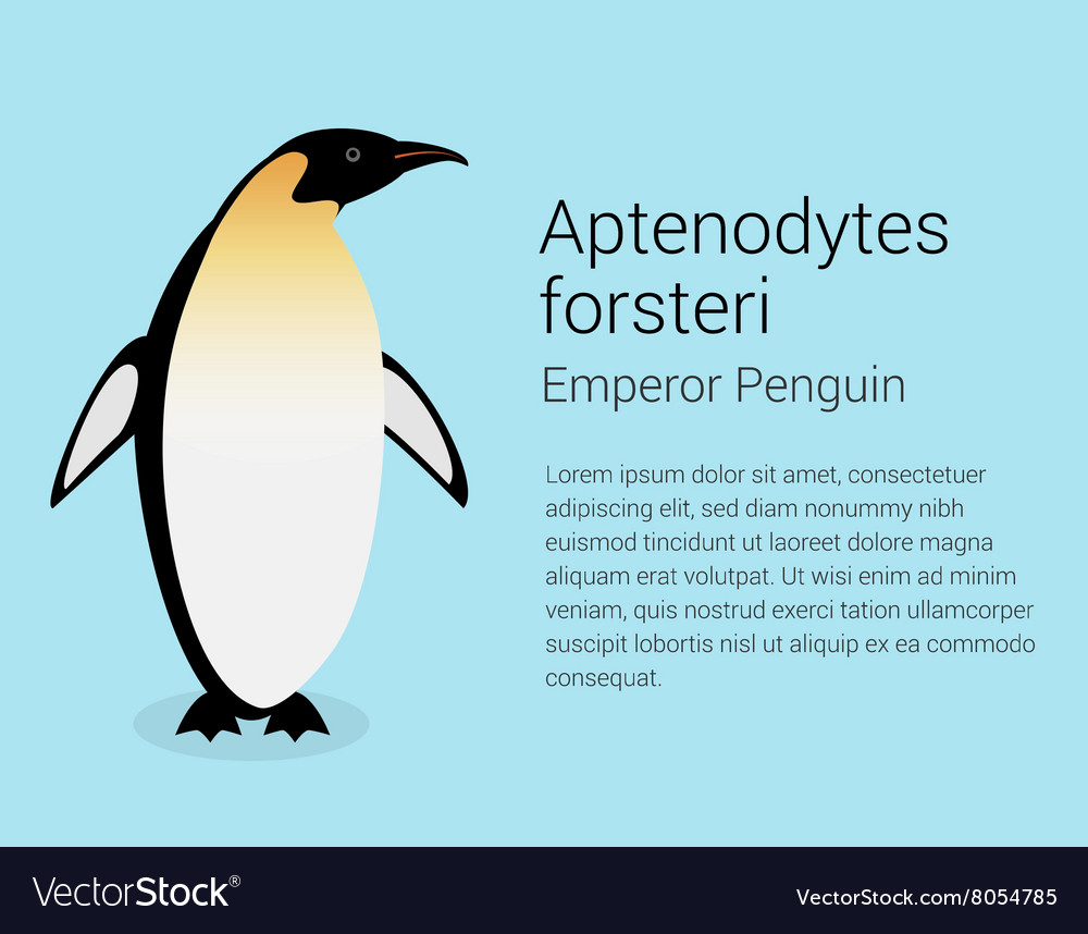 Emperor Penguin Flat isolated on vector image