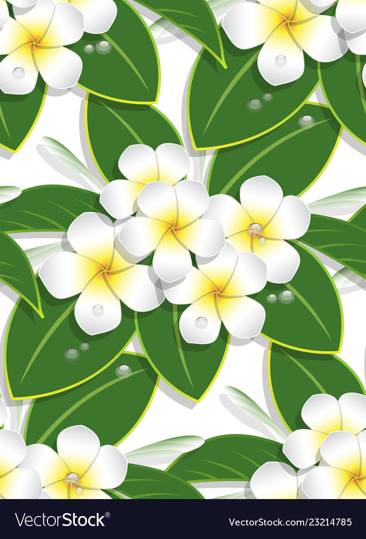 Yellow plumeria flower pattern seamless on white