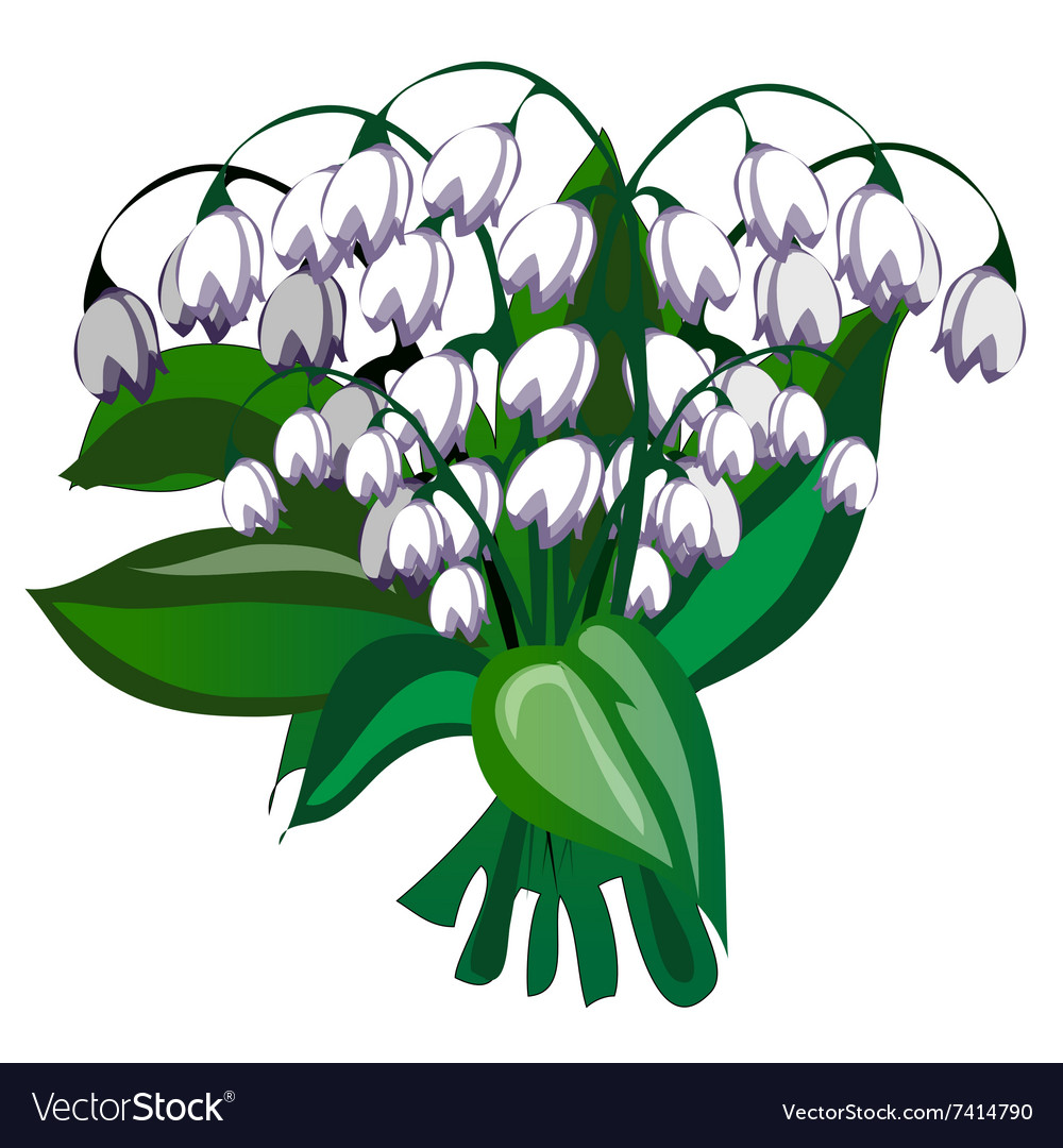 Delicate bouquet of white bells flowers Royalty Free Vector