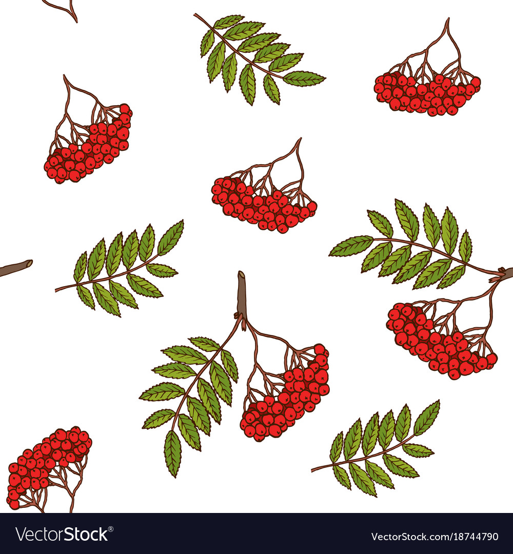 Seamless pattern with rowan branches