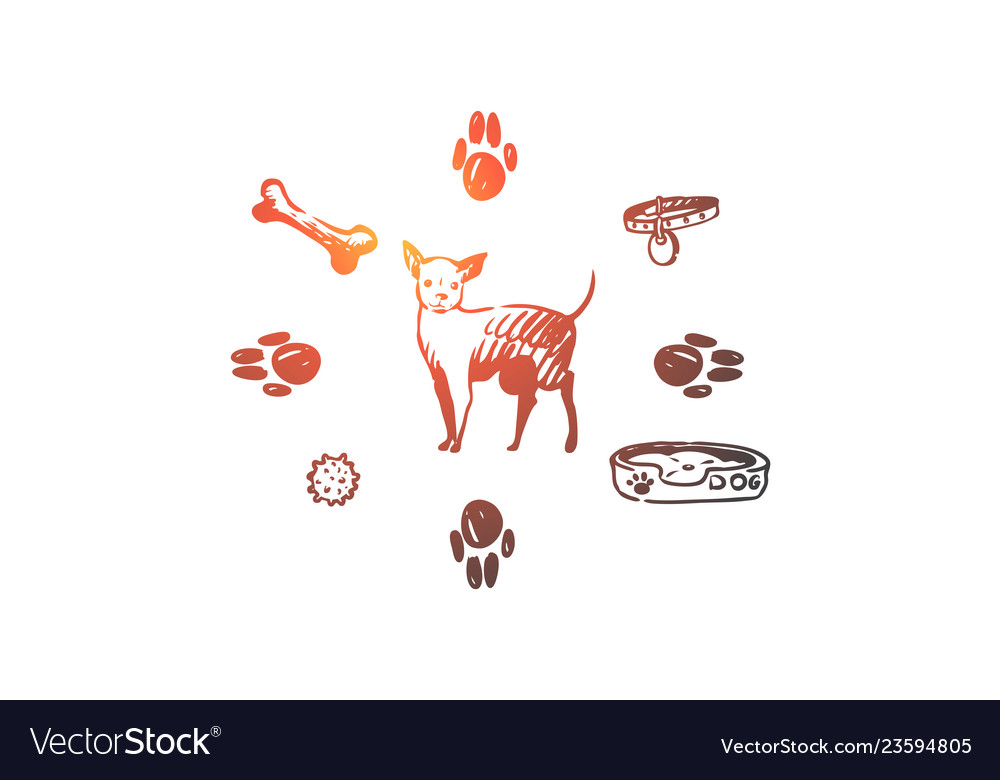 Dog pet animal accessories care concept hand