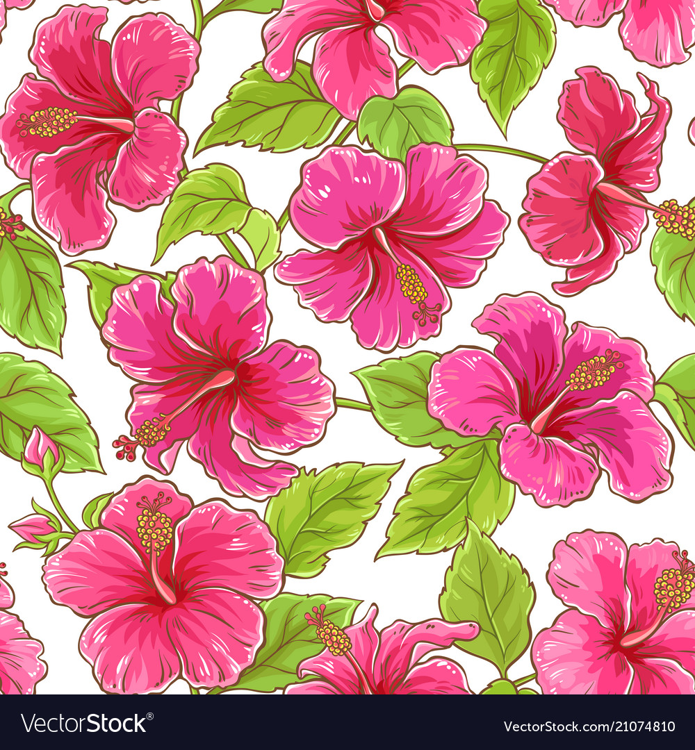 Hibiscus Flowers Pattern Royalty Free Vector Image