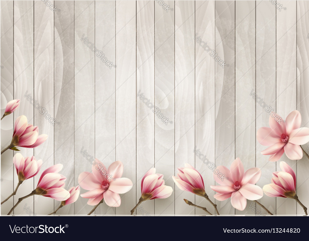 Nature spring background with beautiful magnolia