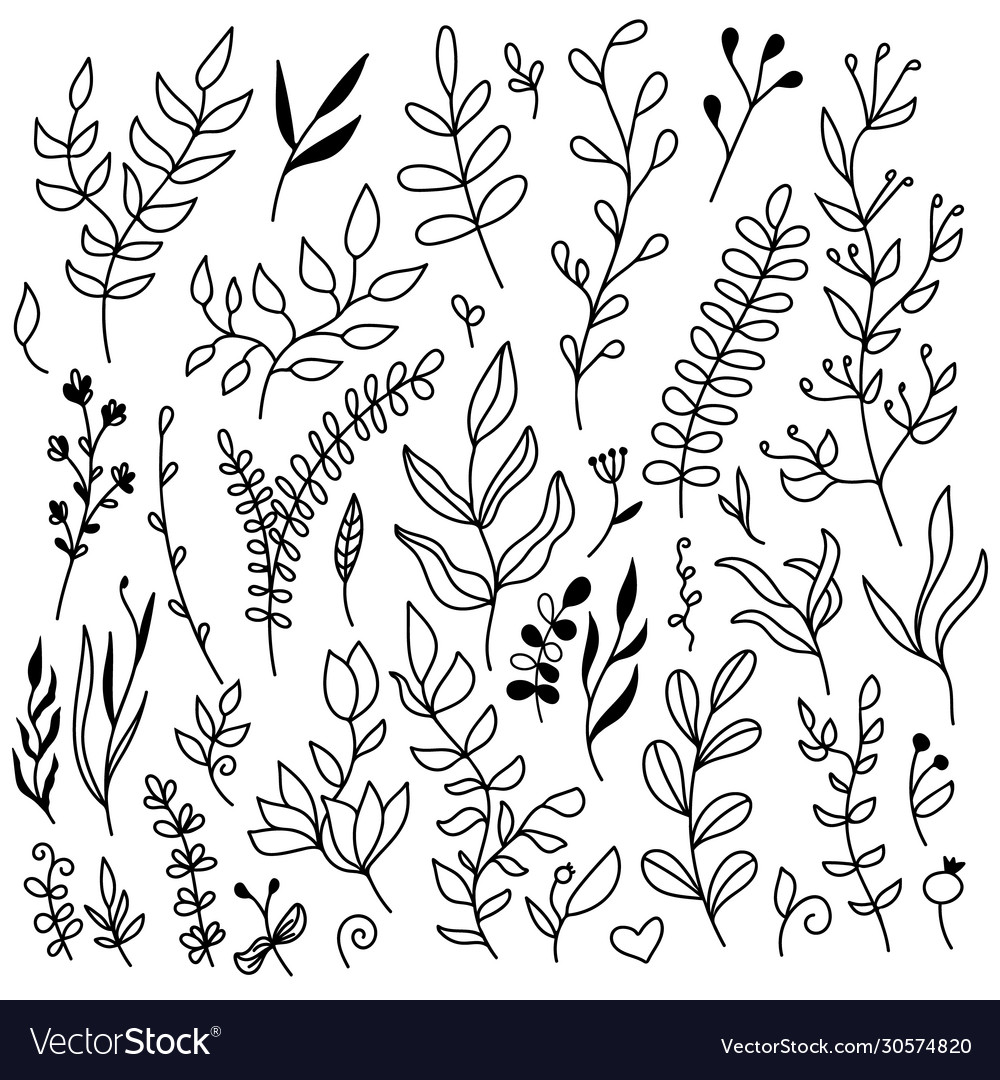 Set floral elements - leaves and