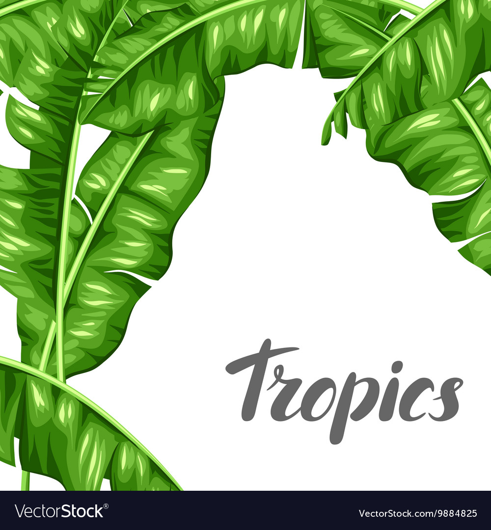 Background with banana leaves Image of decorative vector image