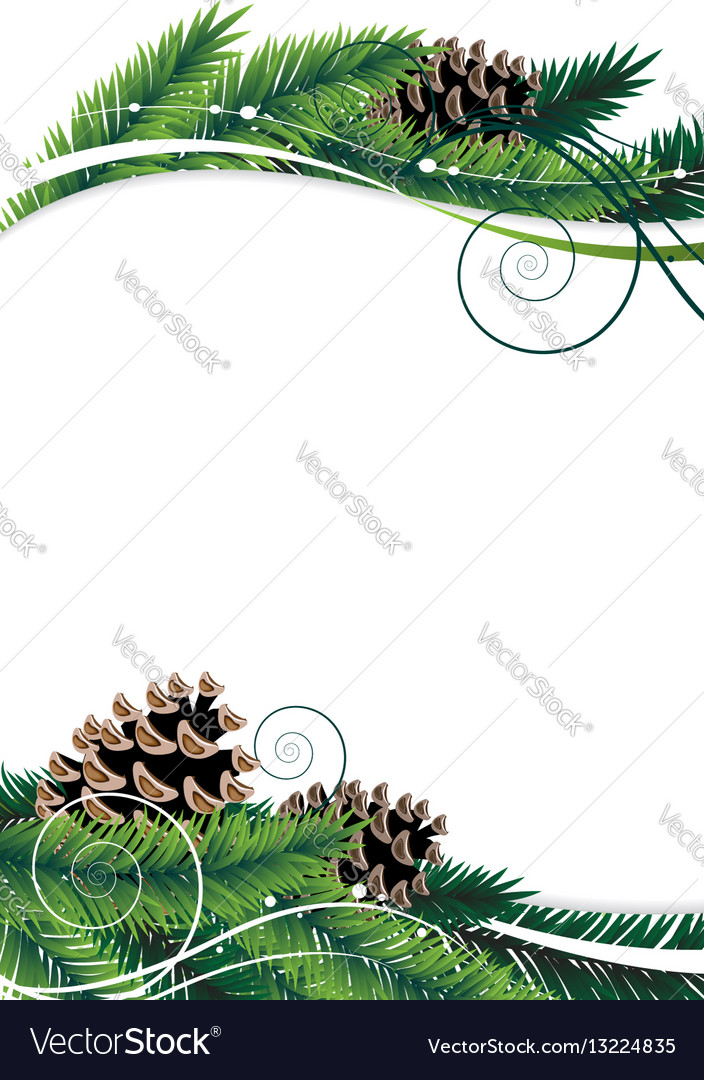 Pine branches and cones vector image